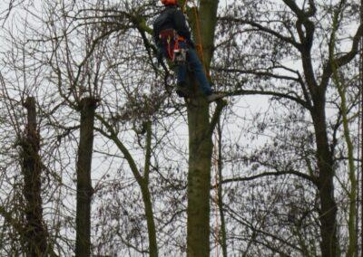 Bomen zagen met behulp van klim uitrusting